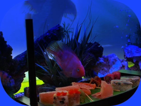 The Fusionista Fish cordially invite you to join them for a delectable meal at their exclusive table next to the fish tank of the Fusionista Restaurant